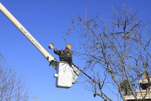 tree_service_2
