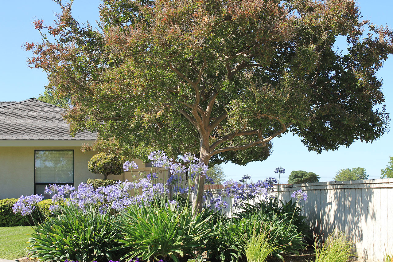 westside-landscaping-photo-gallery-301